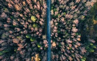 Luftbild Wald - Vontobel Climate Impact Index
